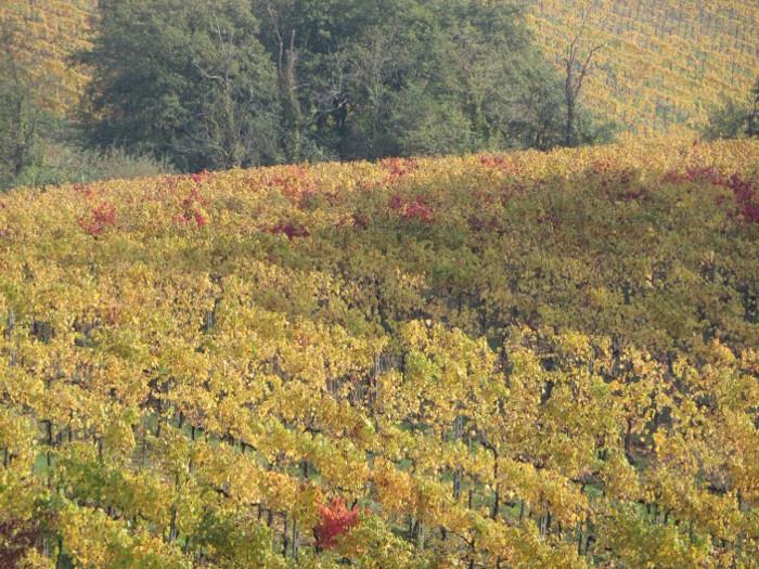 zblizenie_jesiennych_winnic_moja_toskania