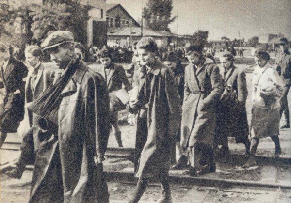 Sanitariuszki w drodze do niewoli