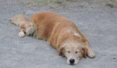 spiacy_pies_w_stadninie_moja_toskania