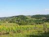 panorama_winnice_moja_toskania