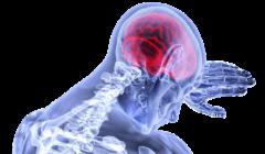mózg-neurologia-Polacy-we-Wloszech